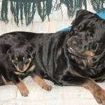 Anja & Puppy