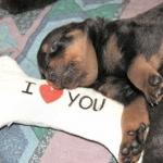 Anja - Behr Puppy