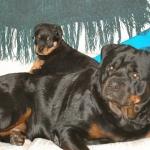 Anja & Puppy1_400