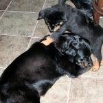 Emboss & Baby Sister