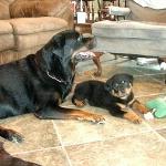Ivana & Lambos Pup