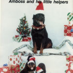 Amboss-Holiday-Cover