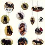 Amboss-Puppies-Holiday