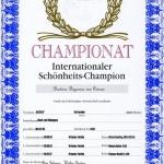Biyounce International Champion Certificate