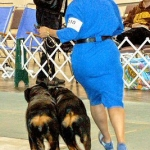 2007 ARC National Specialty Show