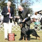 2007 Gainesville Dog Fanciers