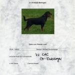 DJUKE Klubsieger Certificate