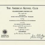DJUKE AKC Championship Certificate