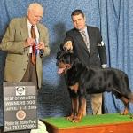 Best of Winners & Winner Dog
