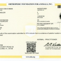 LadyGaga_Cert_OFA_Patellar_Normal_021120