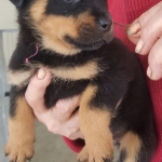monster-champy-122017-pink-girl-6-5weeks
