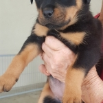 monster-champy-122017-red-girl-6-5weeks