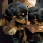 monster-champy-litter-pics-july2018-girls-green-left-orange-right