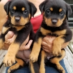 monster-champy-litter-pics-july2018-girls-green-left-yellow-right-090318