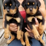 monster-champy-litter-pics-july2018-girls-orange-left-white-right-090318