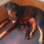 xana-ximo-puppies-010218