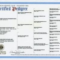 Nadja-von-Evman-AKC-Pedigre