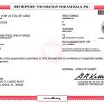 ORNELLA vom Vilstaler LandRO-CA6959/72F/P-VPI - Heart Normal