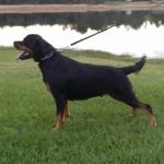 ornella-7-years