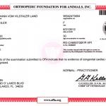 Evman OXANA vom Vilstaler Land RO-CA6957/30F/P-VPI - Heart Normal