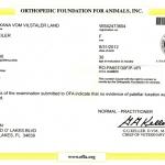 Evman OXANA vom Vilstaler Land RO-PA657/30F/P-VPI - Patella Normal