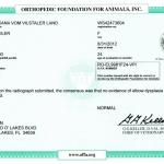 Evman OXANA vom Vilstaler Land RO-EL9981F24-VPI - Elbows Normal