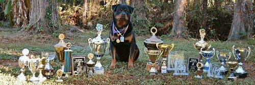 Rottweiler Puppies | German Rottweiler Breeder | Von Evman