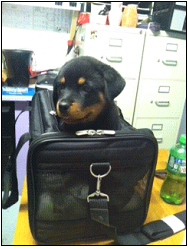 Importing or Exporting a Dog